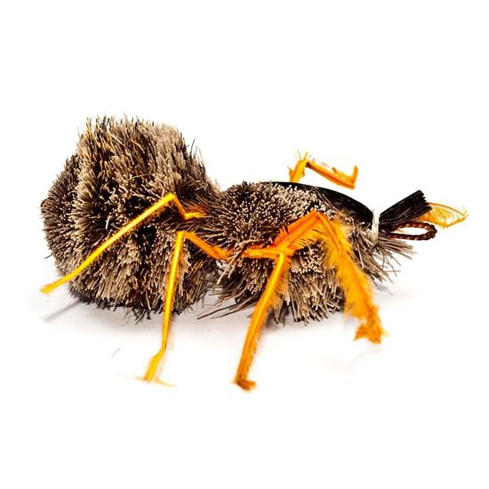 Picture of Purrs Aracno Spider