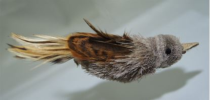 Picture of House Finch Bird